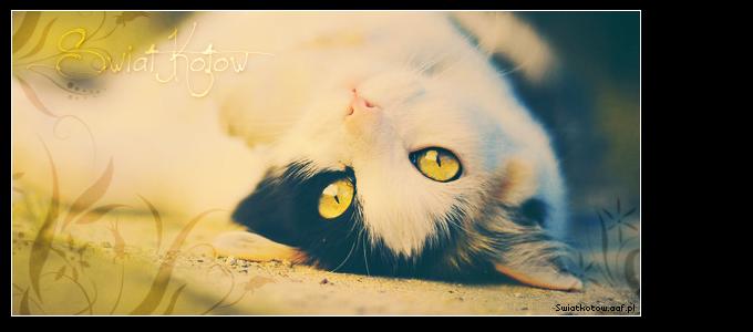 Świat Kotów Strona Główna
